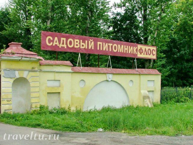 sadovyiy-pitomnik-flos