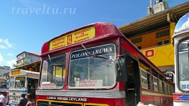 avtobus-41