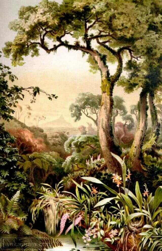 Ботанический сад на хромолитографии 1895 года