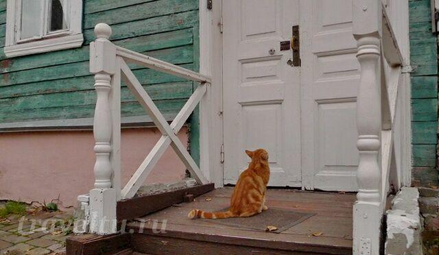 Митрополичий кот вернулся с обхода