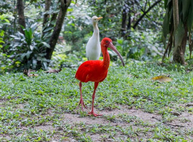 Обитатели парка птиц