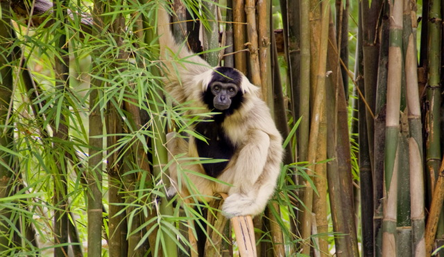 zoopark-khao-kheo-1