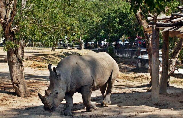 zoopark-khao-kheo-10