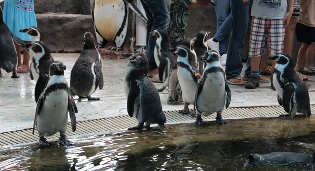 zoopark-khao-kheo-12