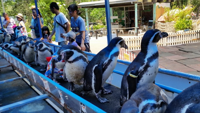 zoopark-khao-kheo-13