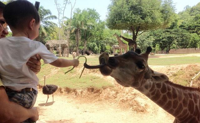 zoopark-khao-kheo-14