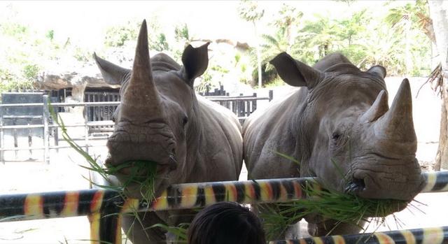 zoopark-khao-kheo-16