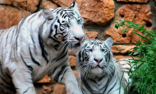 zoopark-khao-kheo-18