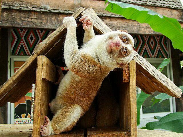 zoopark-khao-kheo-6