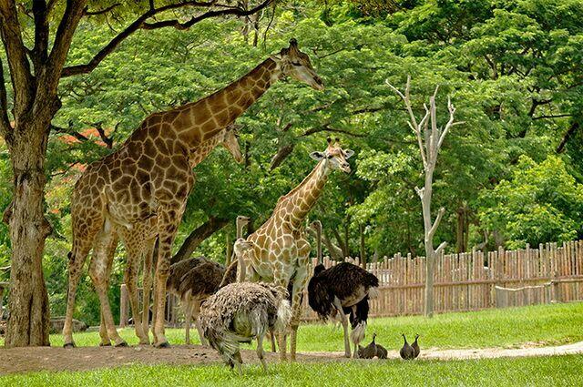 zoopark-khao-kheo-8