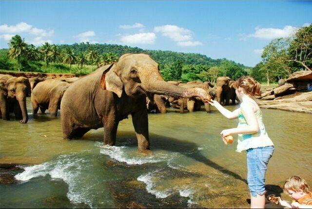 kormit-slona