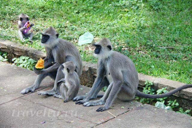 Семейка обезьян