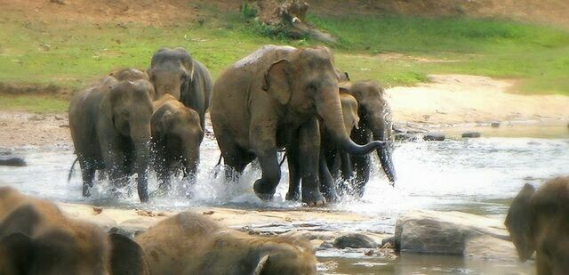 slonyi-begut-kupatsya