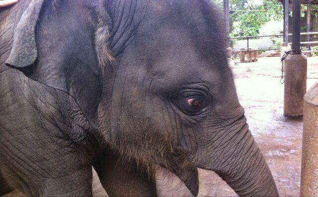 slonyonok