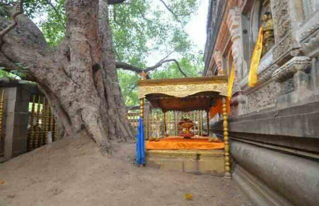 hram-mahabodhi-derevo