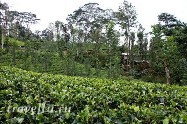 domiki-na-plantatsii