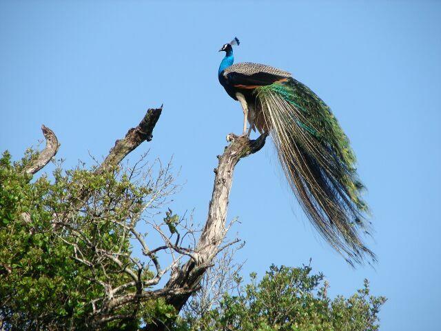 национальные парки Шри-Ланки