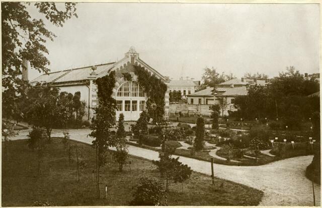 Лиственницы Аптекарского огорода; фото 1901 года